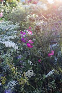 The garden so far…