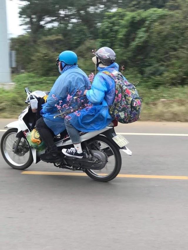 Nhóm du khách lên Măng Đen - Kon Tum thản nhiên bẻ hoa Đào gây bức xúc