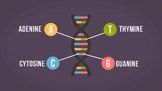 Apa Itu DNA ?, Pengertian DNA, Cara Memodifikasi DNA, Adenine, Thymine, Cytosine, Guanine, Dampak Pengaruh DNA Terhadap Makhluk Hidupnya