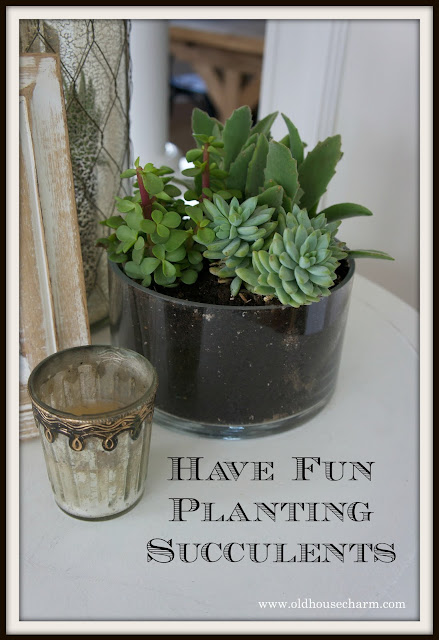 Have Fun Planting Succulents