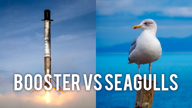 SPACEX BOOSTER vs SEAGULLS ☠️ A DEATHMATCH!
