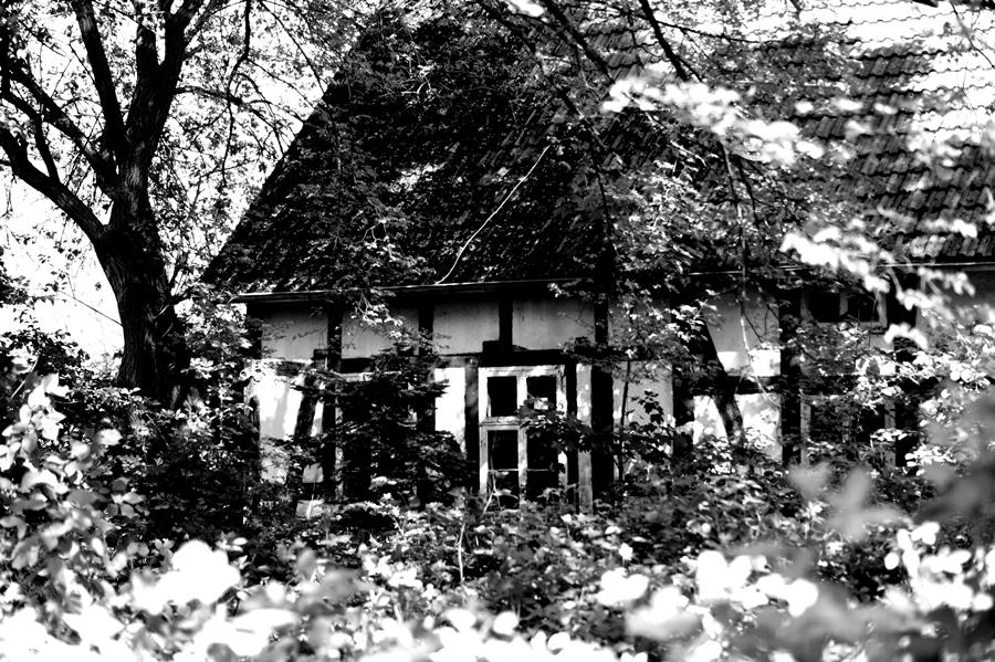 Blog + Fotografie by it's me! | fim.works | SchwarzWeissBlick No 17 | verlassenes Gehöft | Lost Place | zugewuchertes Fachwerkhaus