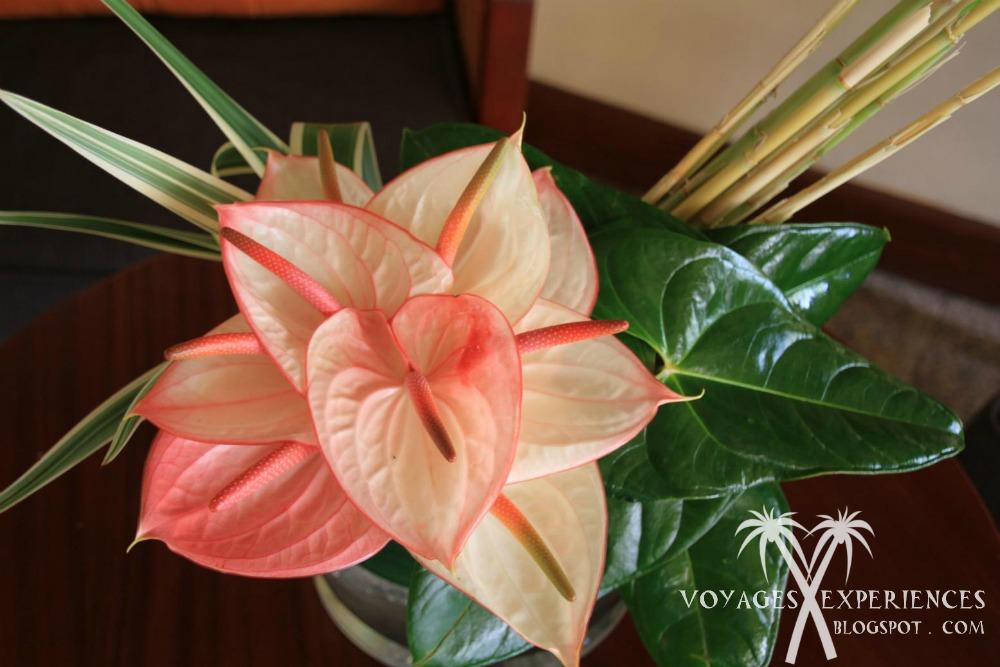 Préférence Voyages et Expériences : Fleurs de l'île Maurice! Des bouquets d  UI21