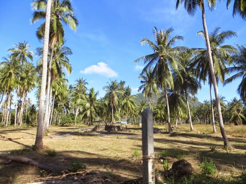 Солнце и пальмы Самуи