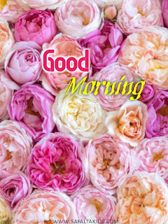 Lovely good morning images 2021  good morning images new  new photo good morning   good morning all images
