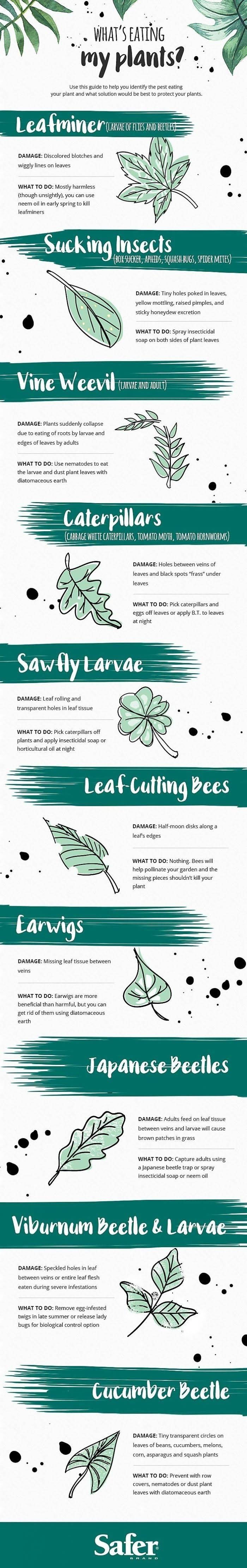 Garden Guide: What's Eating My Plants? #infographics