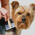 Saiba como cuidar e manter os pelos de seu animal hidratados e saudáveis