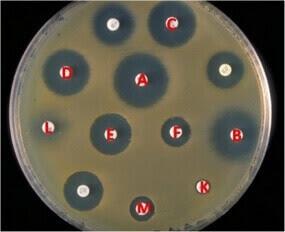 antibiyogram