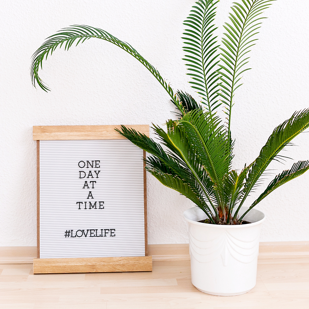 Lovelife Quotes for Home Decoration with Letterboard