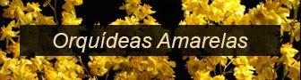 Orquídeas Amarelas