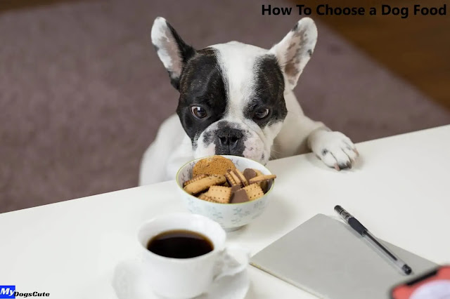 how to choose a good dog food brand how to choose a canned dog food how to choose dog food uk how to choose dog food for allergies how to choose dog food australia how to choose acana dog food how to choose senior dog food how to choose raw dog food how to choose a dog food brand how to choose the right dog food how to choose the best dog food uk choosing a dog food uk how to choose a dry dog food how to pick a good dry dog food how to.choose dog food how to choose dog food dog food how to choose how to choose your dog food how to choose best dog food how to pick a dog food how to choose the best dog food how to choose dog food for puppy how to choose dog food for your dog how to choose a good dog food how to choose good quality dog food how to choose a healthy dog food how do i choose a dog food how to choose a new dog food how to pick out dog food how to choose a quality dog food how to choose right dog food how to choose a safe dog food how to choose wet dog food how to pick a dog food for your dog how to pick best dog food