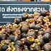 เทสโก้ โลตัส ช่วยเกษตรกร รับซื้อผลไม้เพิ่มกว่า 50% สู่ร้านเอ็กซ์เพรส 2,000 สาขา