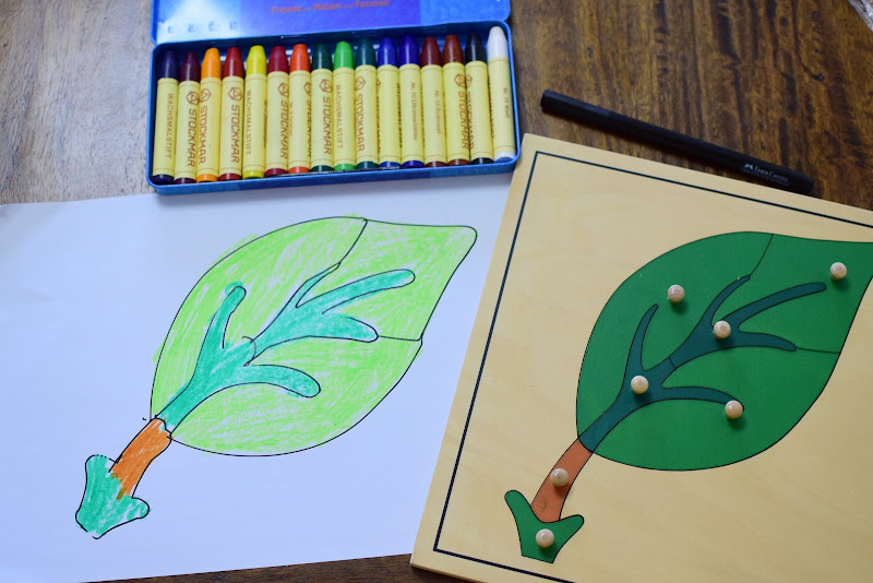 PARTS OF A LEAF Study for Kids: LABELING