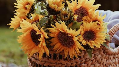 Sunflower Wallpaper, Flowers, Basket, Bouquet