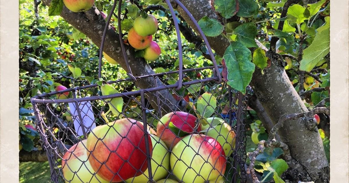 äppelpaj havregryn