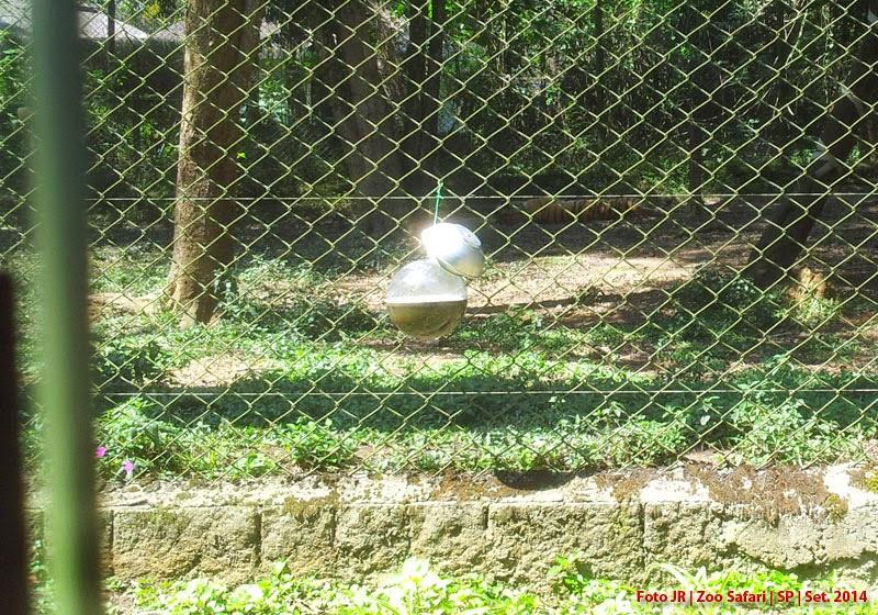 Zoo Safari SP | mosquiteiro