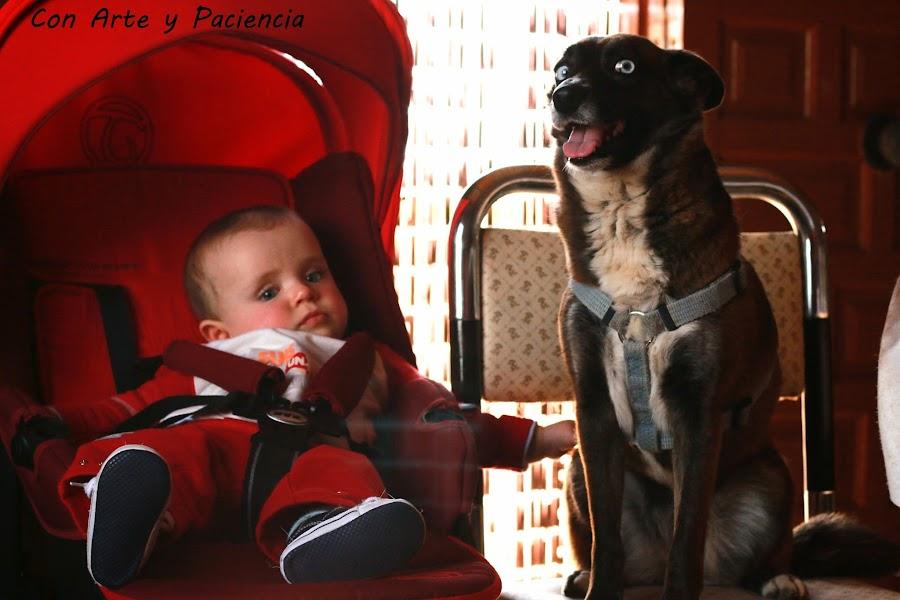 tierna,amistad,friendship,bebe,baby,perro,perrito,dog,doggy,ternura,preciosas,graciosas,fotos,entre,perrita,niño,pequeño,padres,mascotas,perros,pets,parents,risas,sonrisas,alegría,ventajas,happines,advantages,smile
