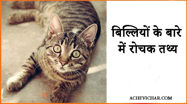 cat facts image