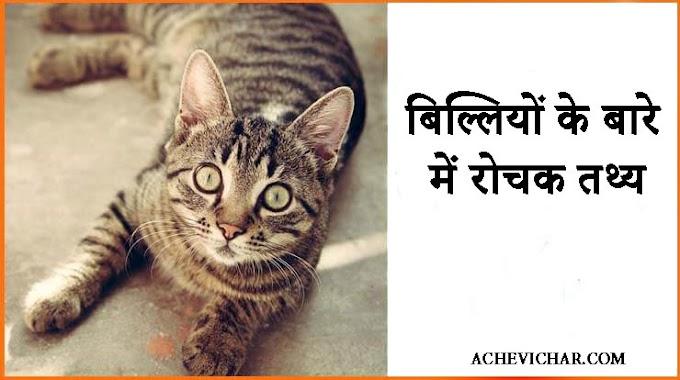 बिल्लियों के बारे में रोचक तथ्य - Facts About Cat in Hindi