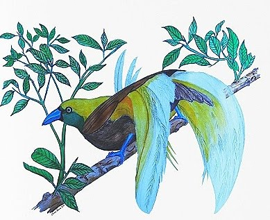 colored pencil drawing of paradise bird