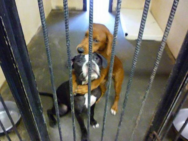 Несчастные псы испуганно жались друг к другу в приюте, куда их выкинули для ожидания усыпления…