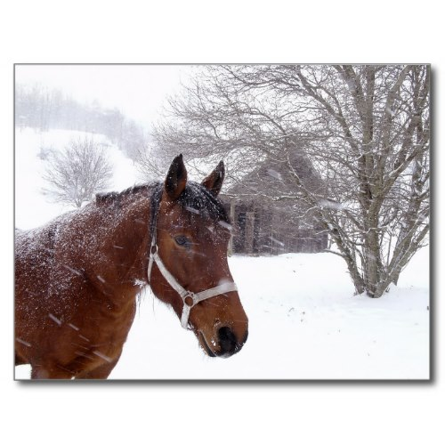 A Horse near an Old Barn in a Snow Storm | Photo Postcard