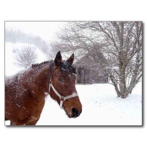 A Horse near an Old Barn in a Snow Storm | Photo Postcard