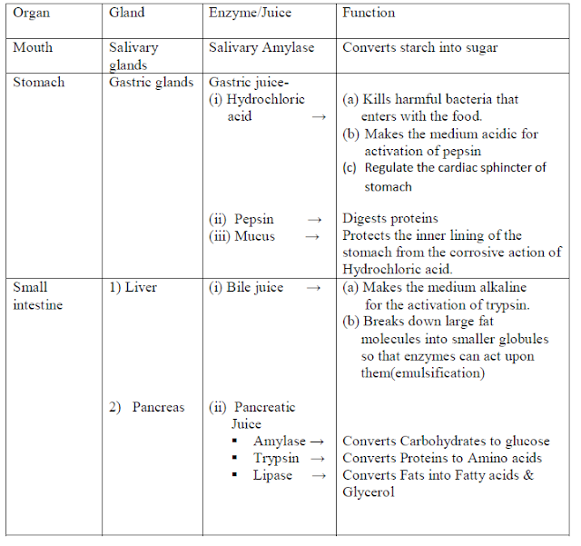 life processes notes Life processes class 10 notes biology ncert cbse chapter 6 download in pdf ➣ life processes – the processes that are necessary for an organism to stay .