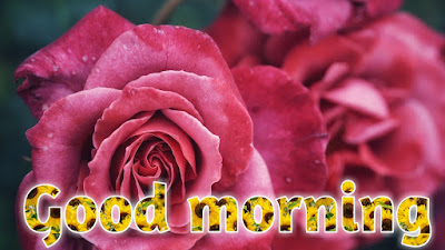 Good morning images with rose flowers good morning flowers images free download