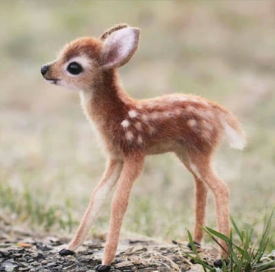 baby deer cute pictures make one happy