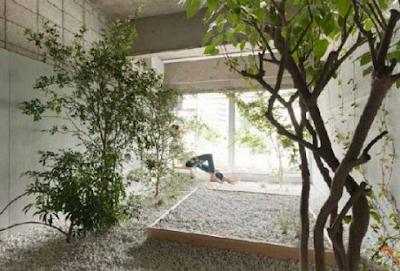Small Garden Inside The House