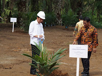Program Replanting Kelapa Sawit