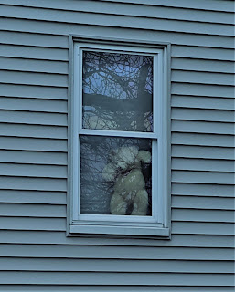 A teddy bear in a window being held up by blinds