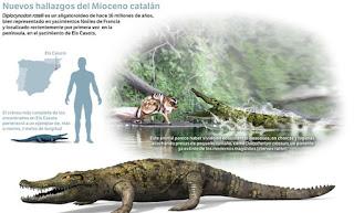 Diplocynodon Ratelii