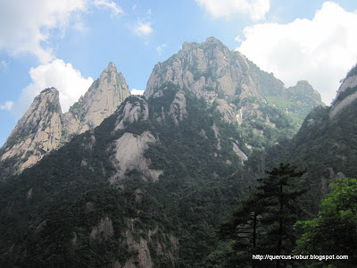 Huanshan - Yellow Mountains - 黄山