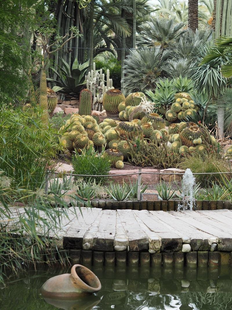 Cacti in Huerto del Cura, Elche