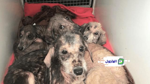 إنقاذ أربعة كلاب صغيرة بعد أن تُركت ميتة في كيس بجانب نهر