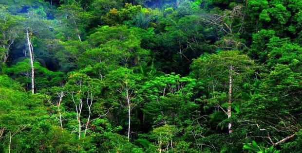 Penyebaran Flora di Indonesia, Pembagian Flora dan Fauna di Indoneisa