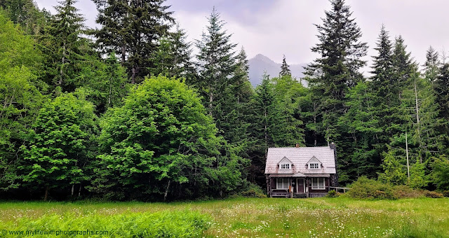 Ranger Cabin, misty mountains, wildflowers, the forrest