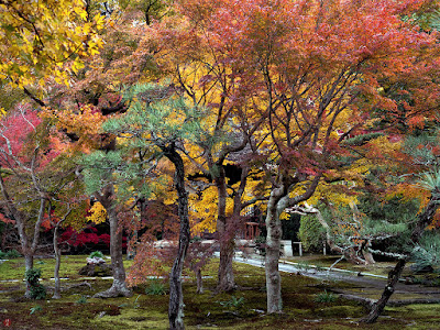 Autumn leaves: Chojyu-ji