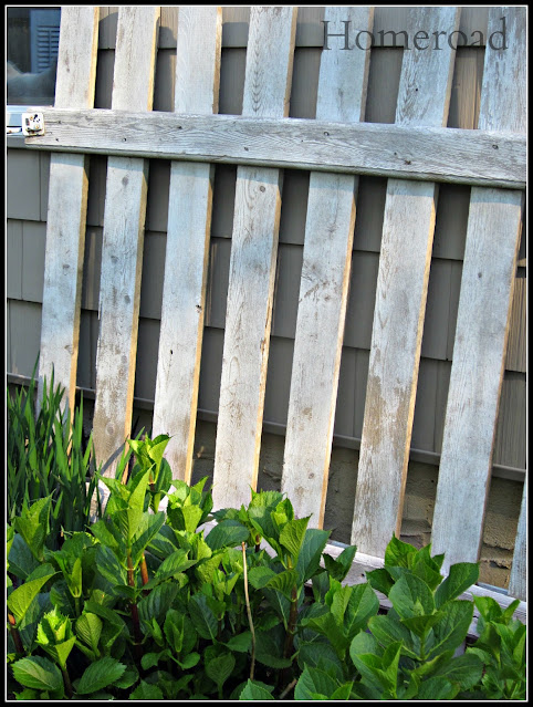 Picket fence gate with green plants