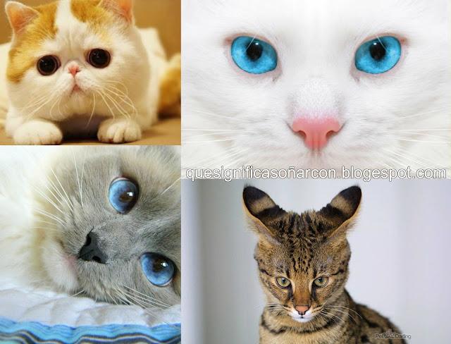 por que soñamos con gatos