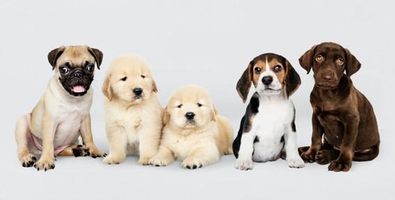 数種類の犬のペット