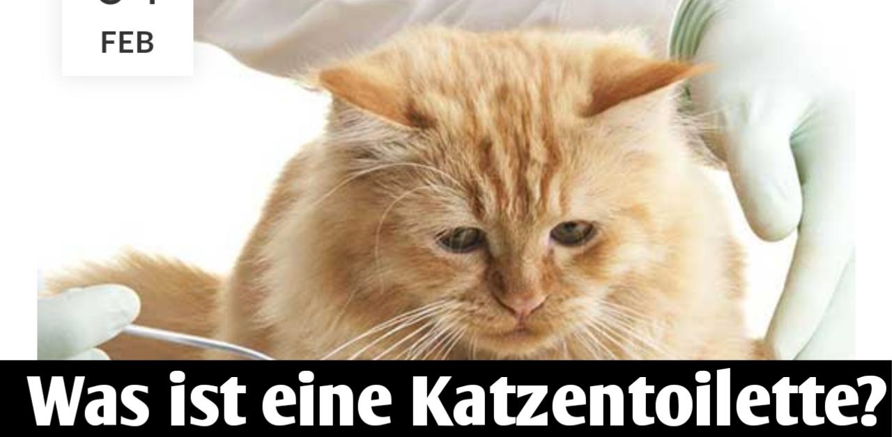 Ist Humanmedizin für Katzen sicher?
