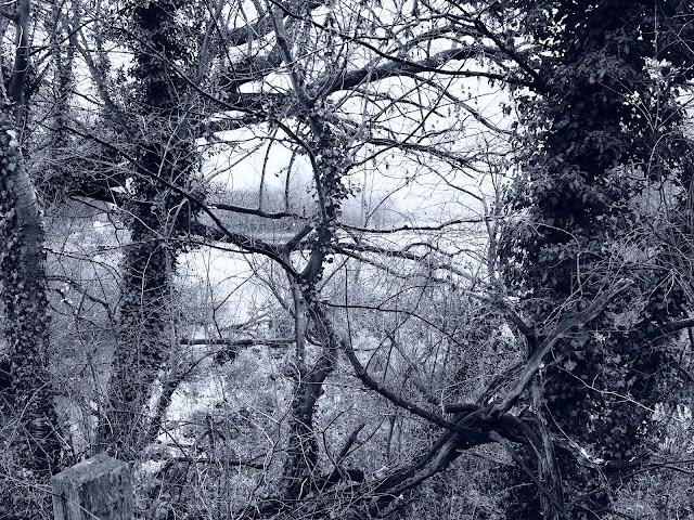 Verwachsene Bäume