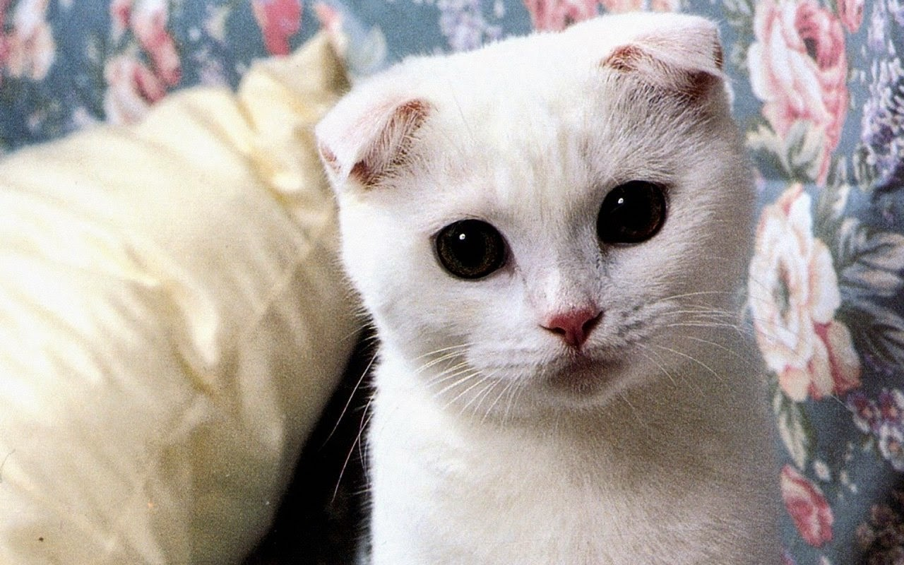 Keep Head High Blog O Modzie I Lifestyleu Najciekawsze Rasy Kotów
