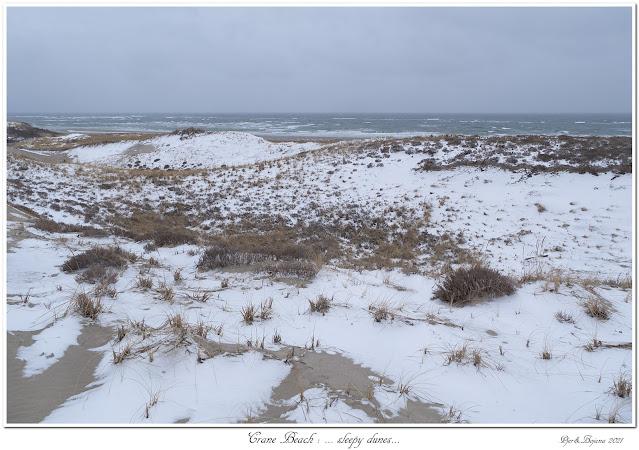 Crane Beach: ... sleepy dunes...
