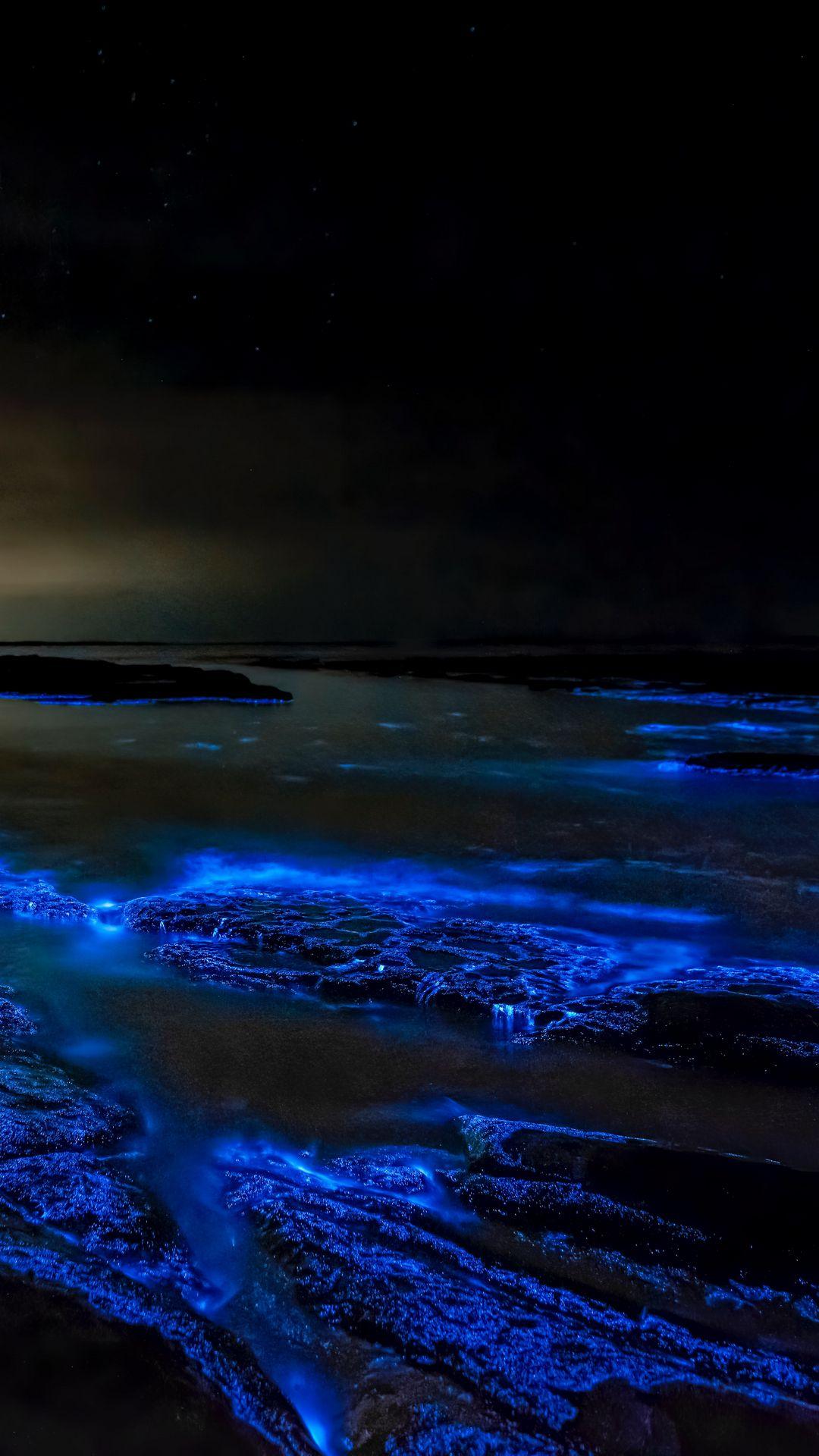 Stunning Fluorescent Blue Sea Algae
