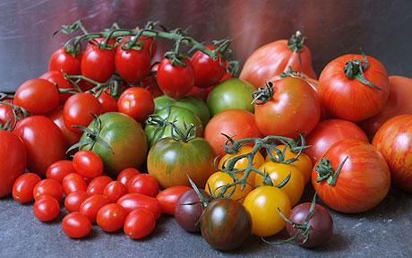 All About Gardening: Fun Facts About Different Tomato Sizes