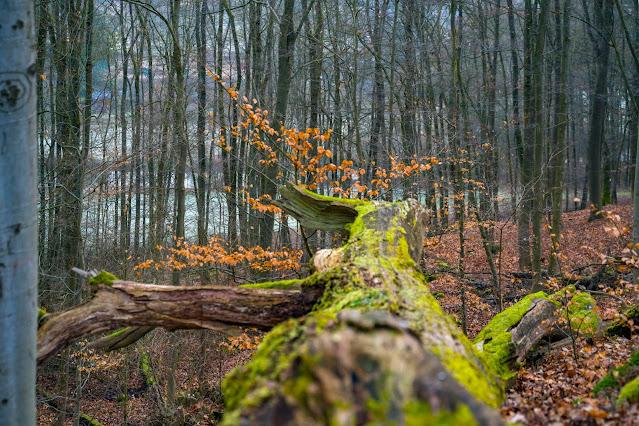 Schächerbachtour | ExtraTour Vogelsberg | Wandern Homberg (Ohm) | Wanderung in Hessen 05